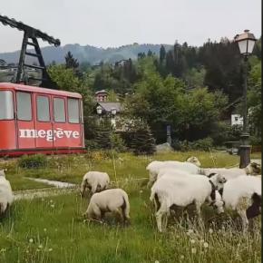 Eco-Grazing in Megève
